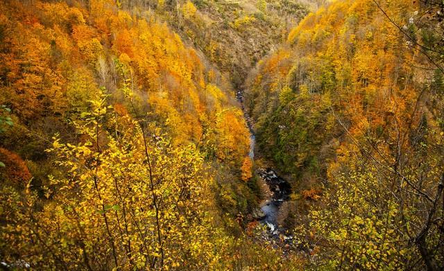 Sonbahar Sakarya'da ayrı güzel