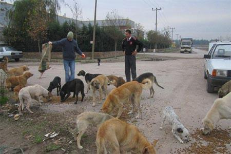 Sokak hayvanlarına şefkat eli