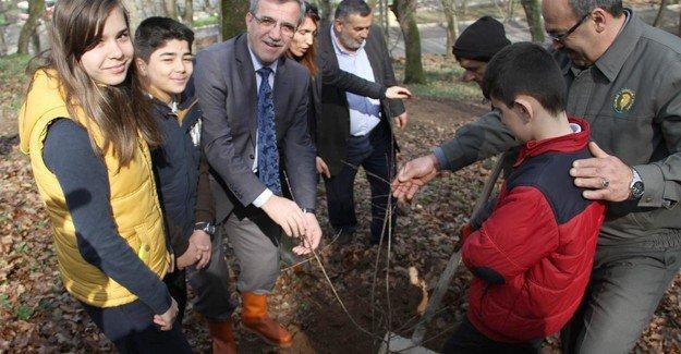 Akyazı Orman Park yaza hazır