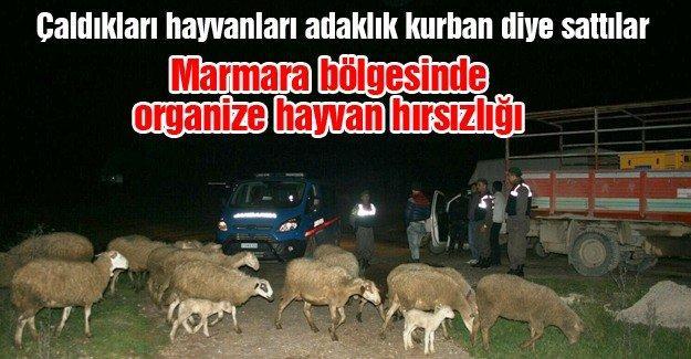 Çaldıkları hayvanları adaklık kurban diye sattılar