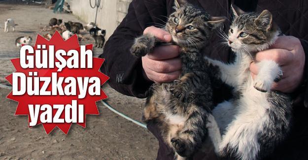 Besle Suriyeliyi oysun kediyi!