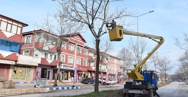 Karasu'da ağaç bakım ve budama çalışmaları başladı