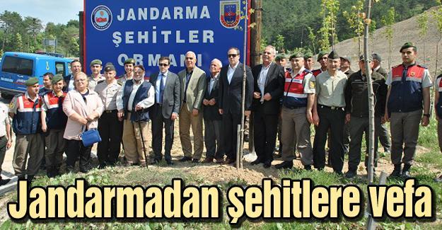 Jandarma şehitleri için fidan dikildi