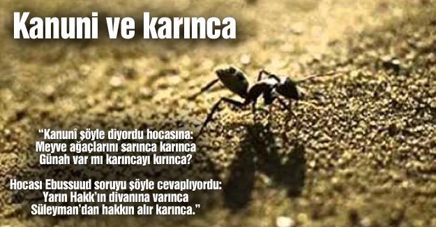 Kanuni ve karınca