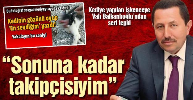 Kediye yapılan işkenceye vali Balkanlıoğlu'ndan tepki