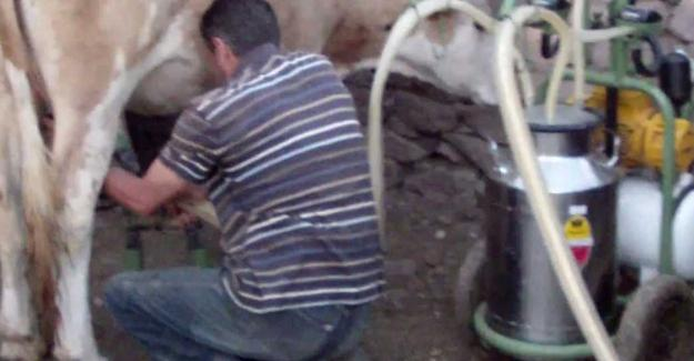 Süt sağarken elektrik akımına kapıldı