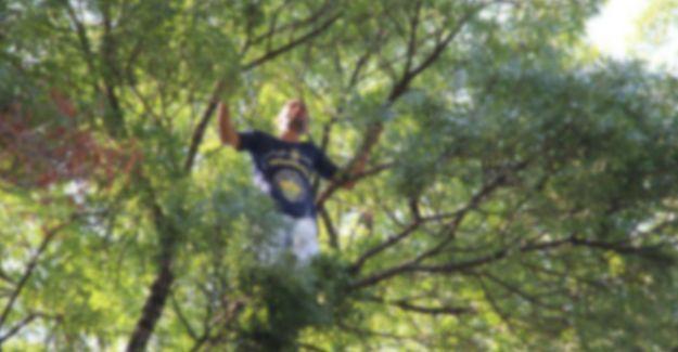 Ağaçtan düşen şahıs hayatını kaybetti