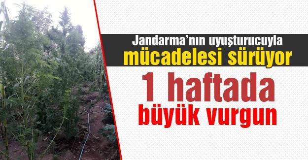 Jandarma'nın uyuşturucuyla mücadelesi sürüyor