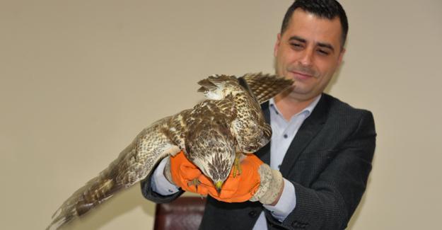 Yaralı doğan ve martı Milli Parklar Müdürlüğüne teslim edildi