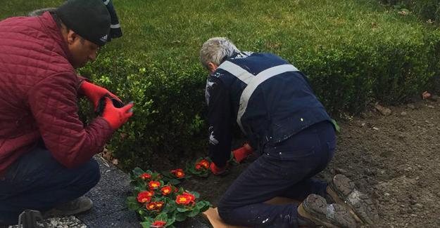 Sapanca mevsimlik çiçeklerle renkleniyor
