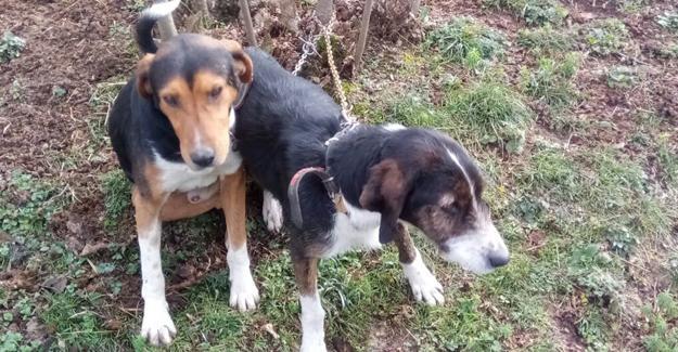 Bir haftadır kayıp olan köpekler bulundu