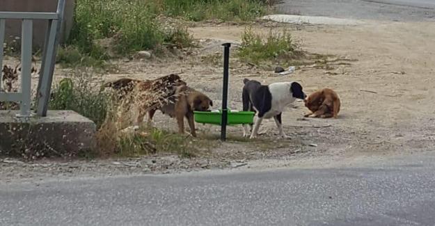Akyazı Belediyesi sokak hayvanlarını unutmadı