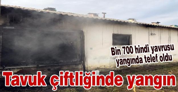 Tavuk çiftliğinde yangın