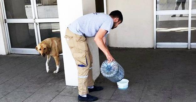 Sahipsiz hayvanlar susuz kalmasın