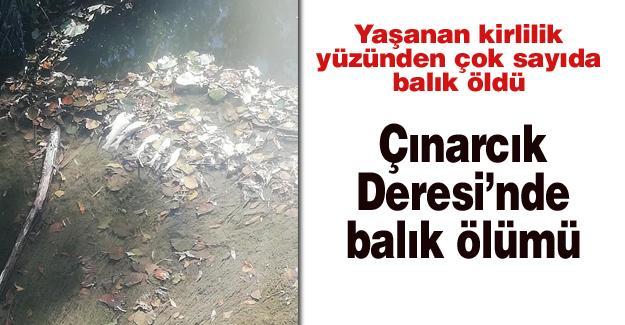 Çınarcık Deresi'nde balık ölümü