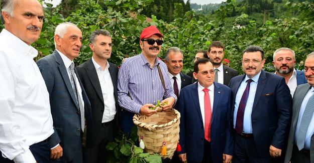Örnek bahçede ekonomik fındık hasadı yapıldı