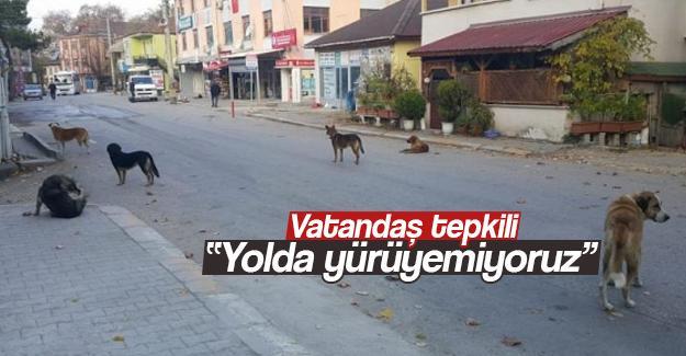 Vatandaşın köpek isyanı
