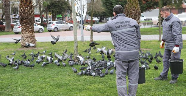 Kuşları da unutmadılar