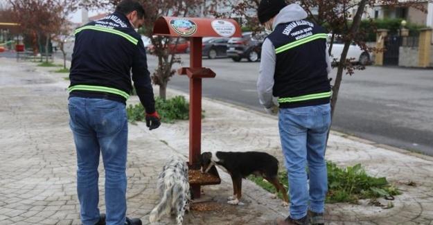 Serdivan Belediyesi can dostları unutmadı