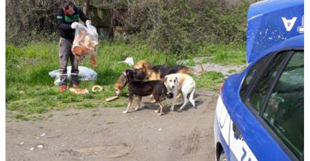 Arifiye Belediyesi sokak hayvanlarını unutmadı