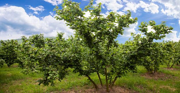 FERRERO değerli tarımdan ilkbahar için zirai uygulama önerileri