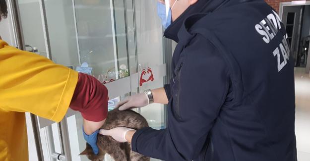 Yaralı kedinin imdadına Serdivan Belediyesi yetişti