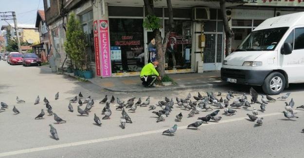 Yiyecek bulamayan kuşları trafik polisi besledi