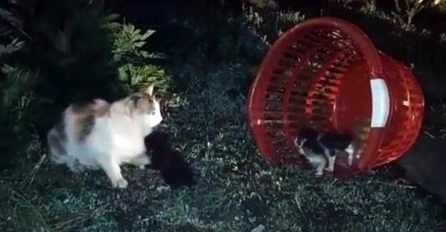 Çatıda mahsur kalan kedileri itfaiye kurtardı