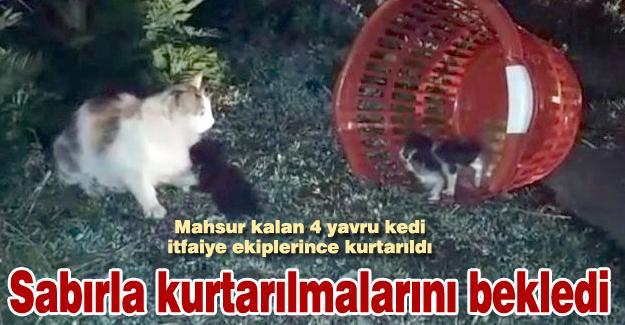 Mahsur kalan 4 yavru kedi itfaiye ekiplerince kurtarıldı