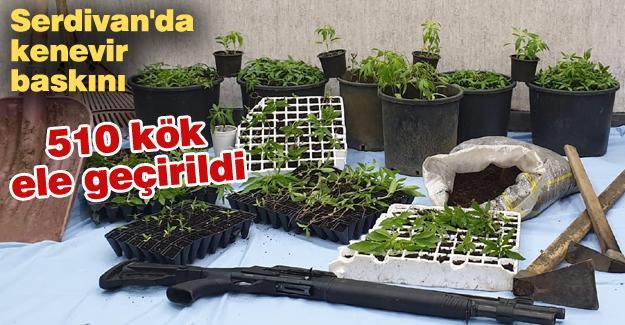 Serdivan'da kenevir baskını!