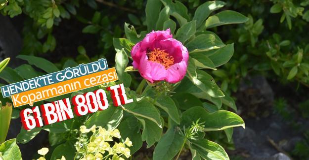 Bu çiçeği koparmanın cezası 61 bin 800 TL