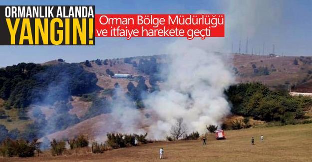 Ormanlık alanda yangın çıktı!