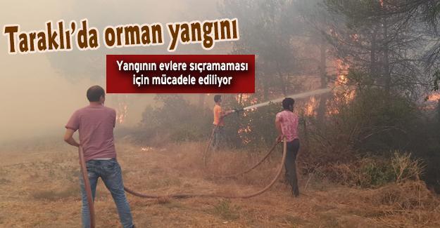 Taraklı'da orman yangını!