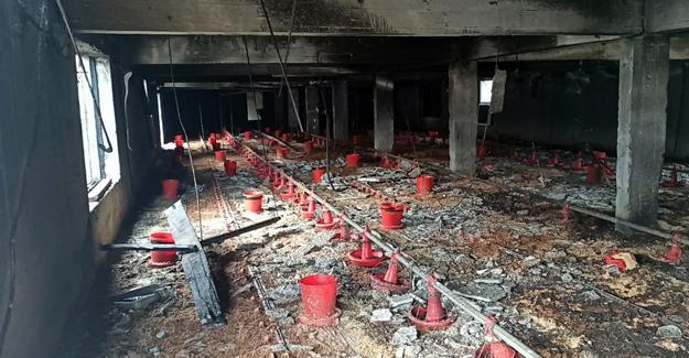 30 bin civciv için hazırlık yapılan kümes alev alev yandı