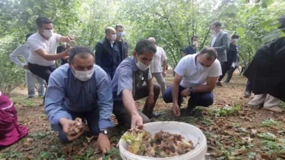 Vali Kaldırım mevsimlik tarım işçileriyle fındık topladı