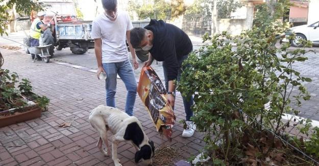 Sokak sokak gezerek hayvanları besleyen gençler takdir topladı