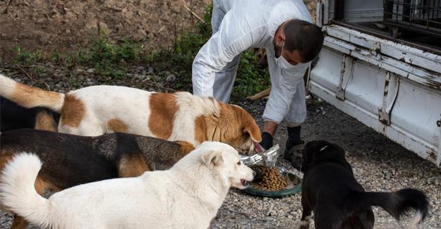 Erenler'de sokak hayvanları unutulmuyor