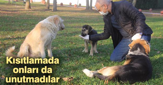 Emniyet Müdürü Kaya sokak hayvanlarını elleriyle besledi