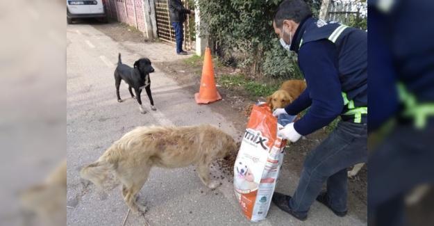 Serdivan Belediyesi, sokak hayvanlarını yalnız bırakmadı