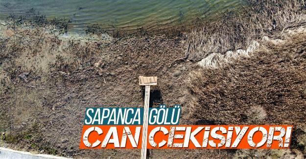 Sapanca Gölü can çekişiyor!