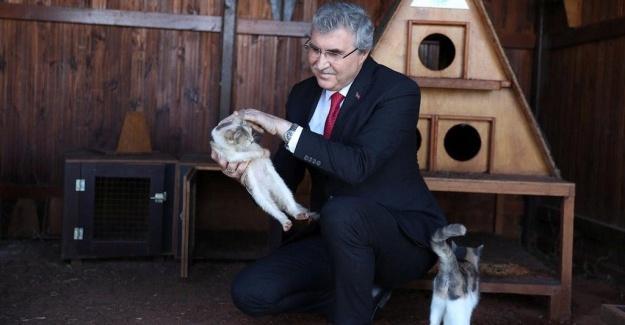 Sokak Hayvanları Rehabilitasyon Merkezi ihaleye çıkıyor