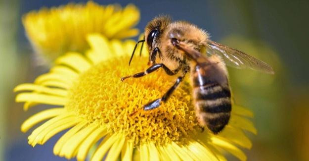 Çiftçilere arı kullanımı eğitimi verilecek