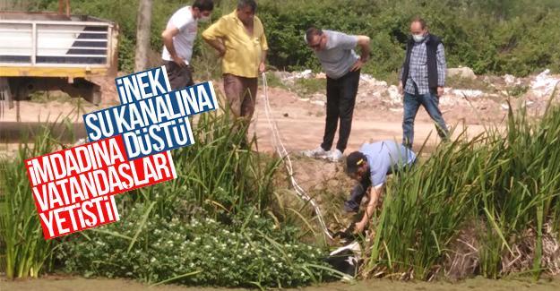 Kanala düşen hayvanın imdadına vatandaşlar yetişti