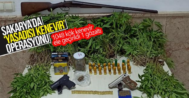 Sakarya'da 'Yasadışı Kenevir' operasyonu