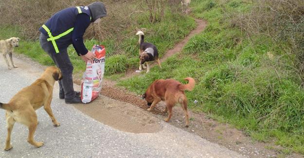 Salgında sokak hayvanlarına özel ilgi