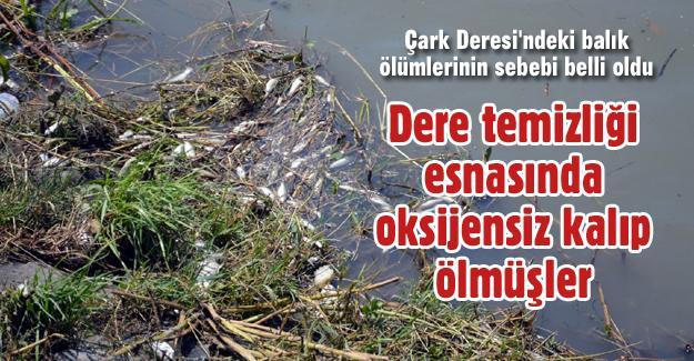 Dere temizliği esnasında oksijensiz kalan balıklar ölmüş!
