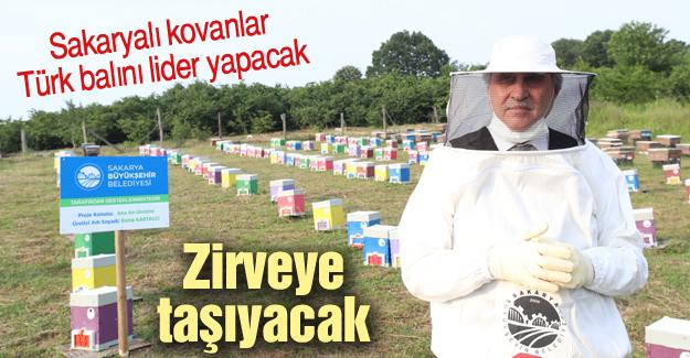 Sakaryalı kovanlar Türk balını lider yapacak
