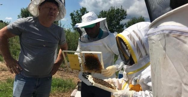 Ana arı üretimi eğitimleri sona erdi