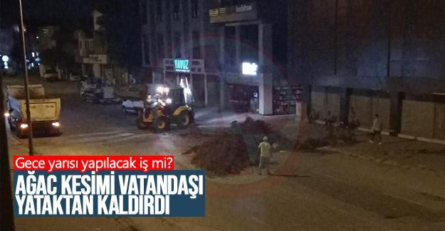 Gece kesilen ağaç vatandaşı panikletti