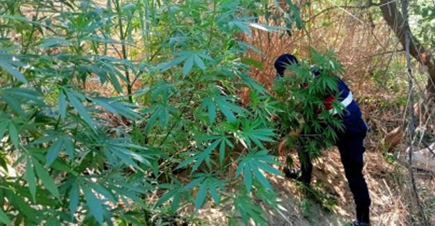 Karasu'da uyuşturucu operasyonu! 2 gözaltı